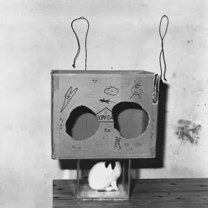 Boxed rabbit, 2002