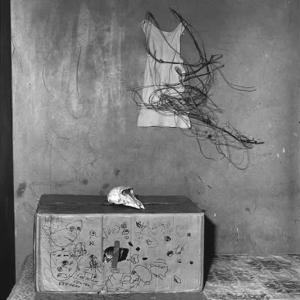 Cat in box, 2002