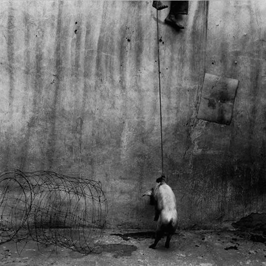 Hanging pig, 2001