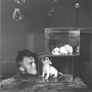 Puppies in fishtanks, 2000
