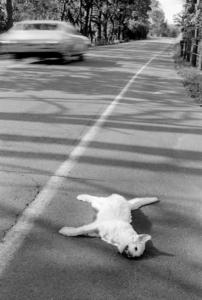 Dead Cat, 1970
